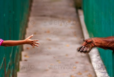 Child throwing nut to monkey in a zoo
