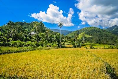 Tropical landscape of  Flores Island