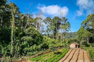 Sumatran countryside below Gunung Sibayak