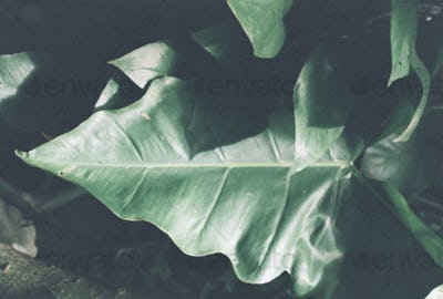 Close up image of tree leaves