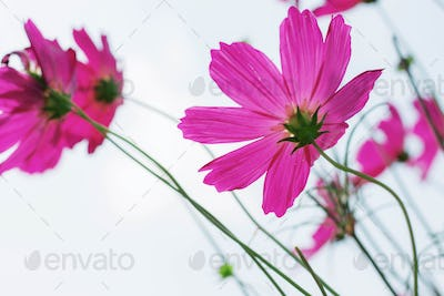 cosmos at the sky