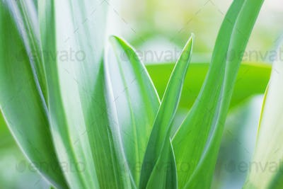 Green leaves with refreshing