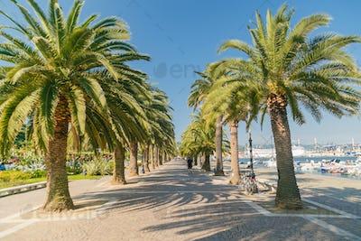 Promenade alley with palm trees in La Spezia, Italy