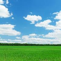 Green grass field and blue sky