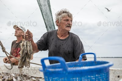 Fishermen sorting catch of shrimp on the deck of a ship.