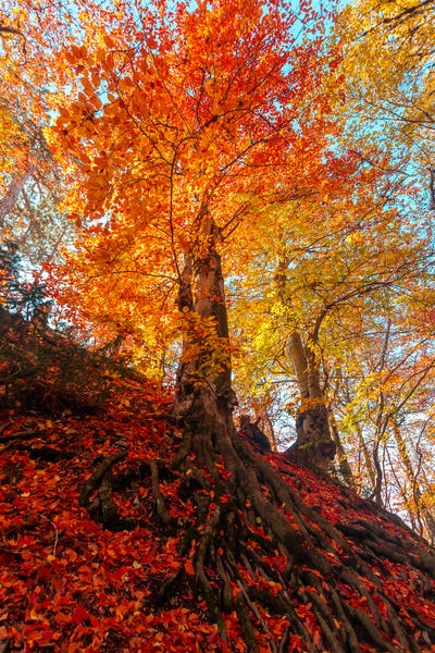 Golden autumn in the forest