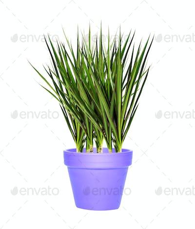 bush in a clay pot