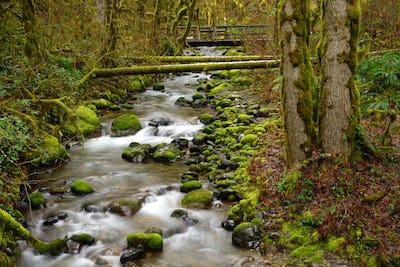 Oregon Rain Forest Mossy Green Babbling Brook