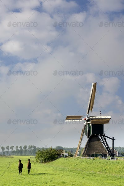Horses in front of a windmill