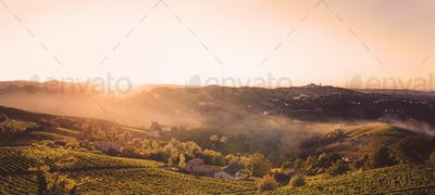 Sunset in the fields with vineyards