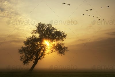 flying geese above a misty meadow