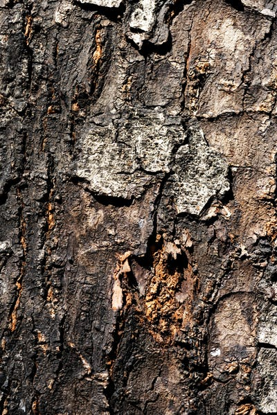 Closeup of bark texture