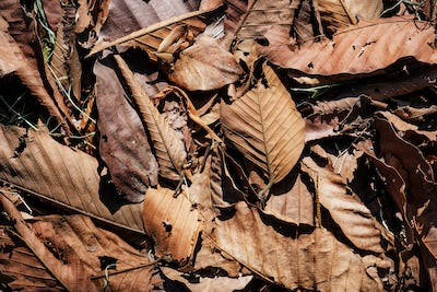 Closeup of dried leaf in autumn