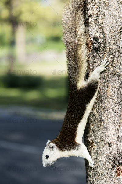Adorable squirrel on the tree