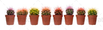 Group of cactuses