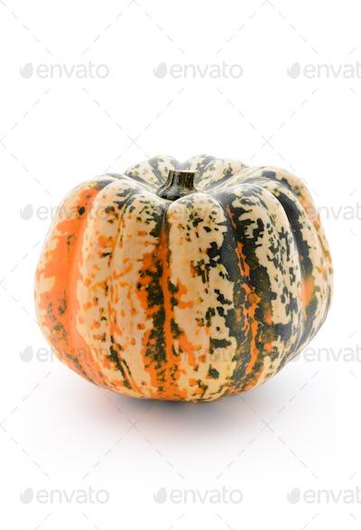 Single pumpkin