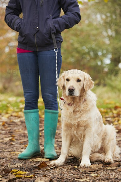 Close Up Of Mature Woman On Autumn Walk With Labrador