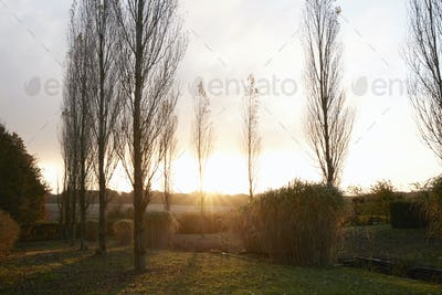 Autumn Sunrise Through Trees Over Garden