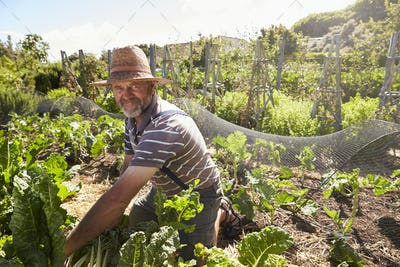 Portrait Of Mature Man Working On Community Allotment