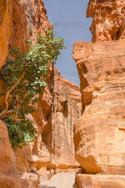 the siq canyon. Petra, Jordan country