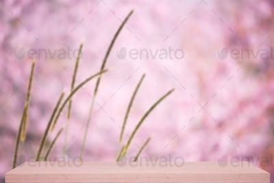 wild himalayan cherry flower defocus background with shelf