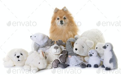 pomeranian spitz and cuddly toys