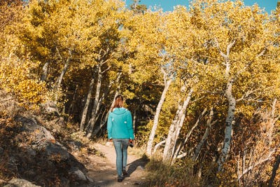 Tourist in aspen grove at autumn