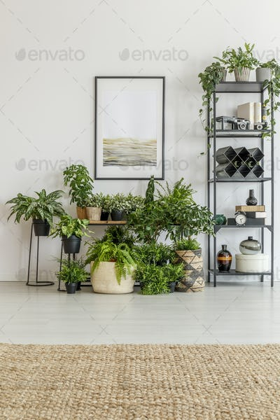 Bright room filled with plants