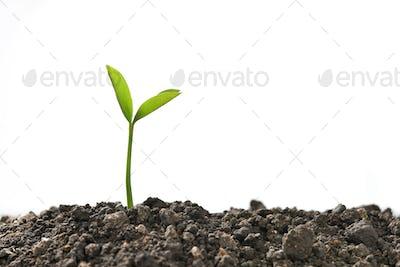 Plant,Tree
