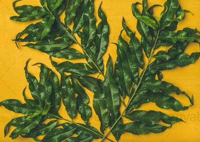 Tropical tree green leaves over bright yellow background, top view