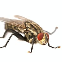 Fly with red eyes on a white background