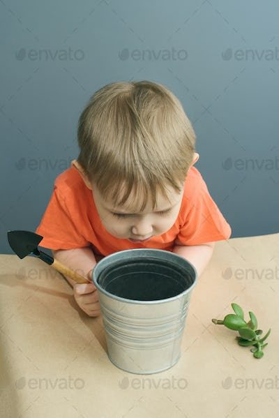 Child plants a crassula ovata plant