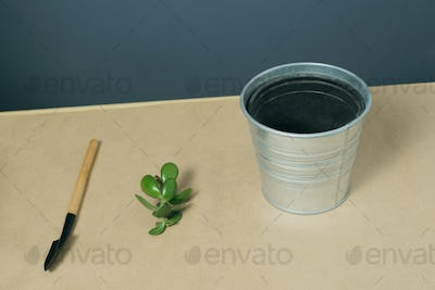 shovel, money tree sprout and empty pot on kraft paper