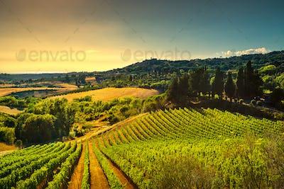 Casale Marittimo village, vineyards and landscape in Maremma. Tu