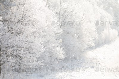 Beautiful Snowy White Forest In Winter Frosty Day. Winter Woods