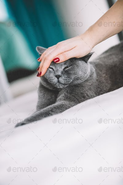 Woman's hand petting a grey cat.