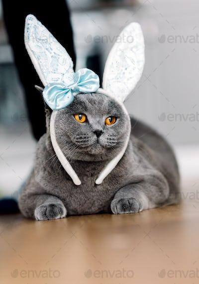 Grey cat with cute bunny-like headband