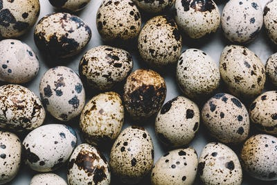 Group of quail eggs with dark spots laying together