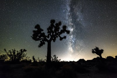 Milky Way in Joshua Tree
