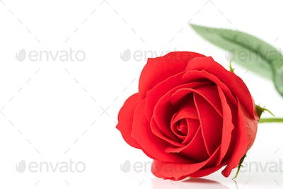 Single Red plastic fake roses on white