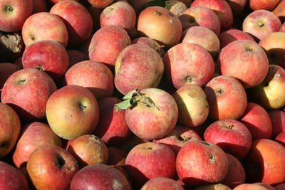 Bunch of freashly picked apples