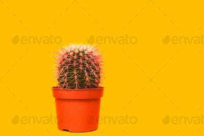 Pink Cactus. Art Gallery Fashion Design. Minimal Stillife. Concept on Yellow background
