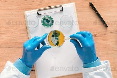Overhead view of laboratory technician analyzing petri dish bact