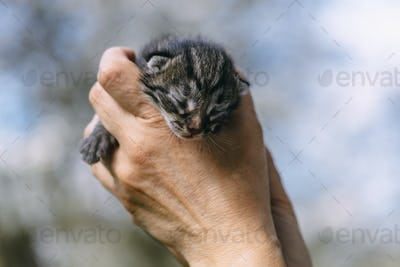 Newborn kitten in hands outdors