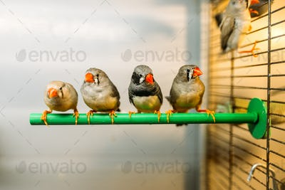 Birds sitting on a stick in pet shop