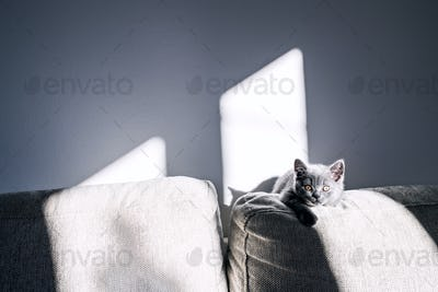 A small kitten sitting on a sofa.