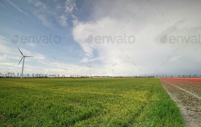 green grass field and windmills over blue sky