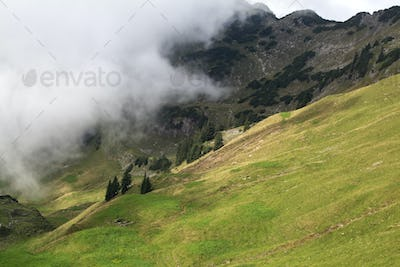 fog in summer mountains