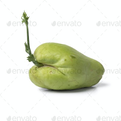 Sprouting green chayote