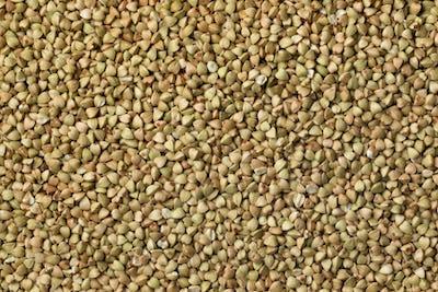 Dried buckwheat seeds